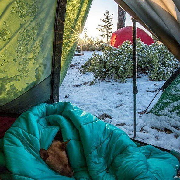 The best days are spent c&ing (with dogs). #c&ingwithdogs @robinventures & 63 best Dogs in Tents images on Pinterest | Tent Tents and Campsite