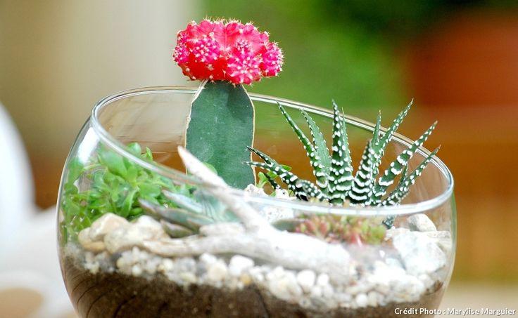 terrarium de succulentes
