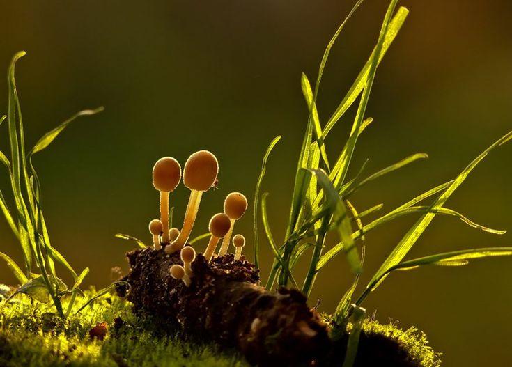 Mshrooms