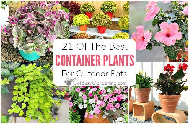 21 Best Container Plants For Pots – Plants