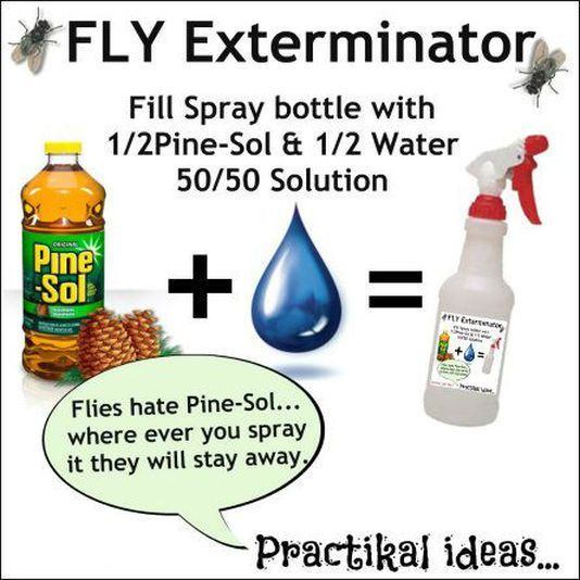 Those pesky flies are at it again! These annoying little creatures are attracted to decaying organic filth... try our Home Remedy to get rid of them