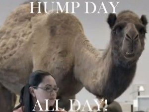 hump day camel | Geico Camel Hump Day Great Brand Recognition Nodinjason