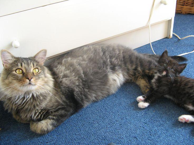 Toby + Hubert 2011