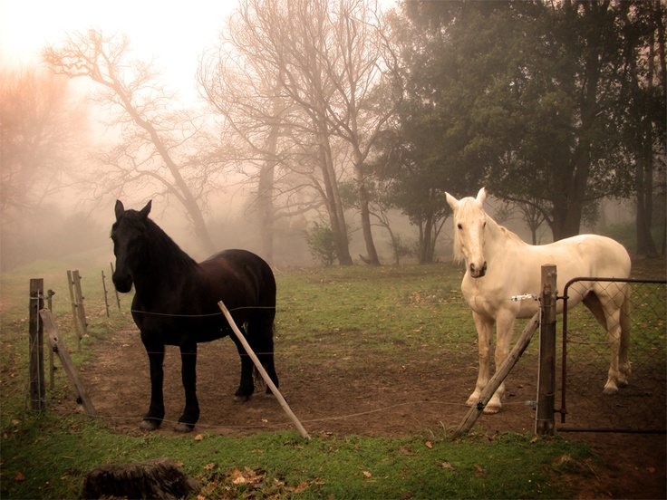 Horses at the Tokay Forrest by Delana Haughton