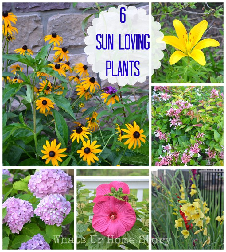 Garden talk 6 sun loving plants summer garden plants for Low maintenance full sun flowers