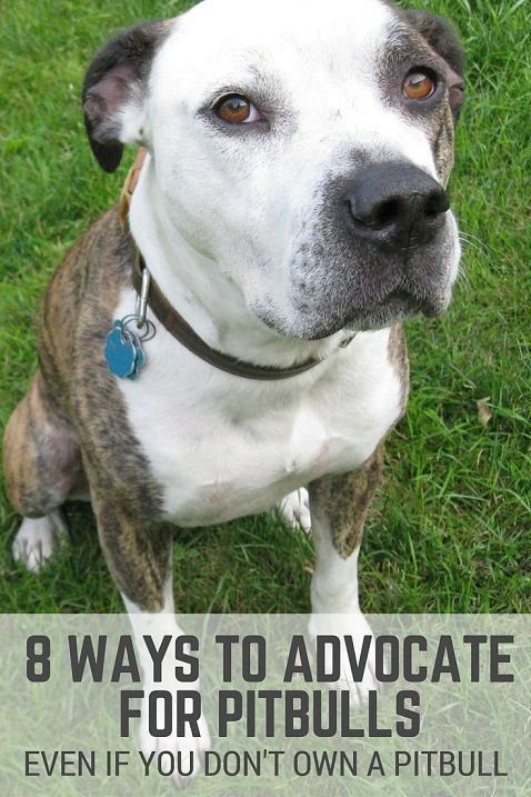 Since pitbull-type dogs are unfairly targeted at times, I wanted to put together a list of ways all dog lovers can help pitbulls, regardless of what type of dogs they own.
