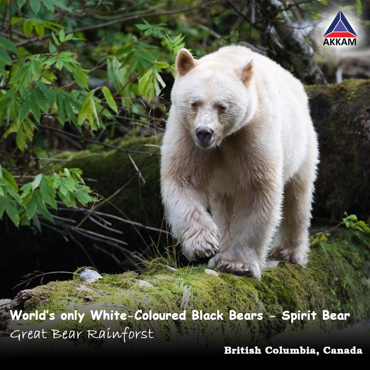 Canada is the place where Polar bears are not the only