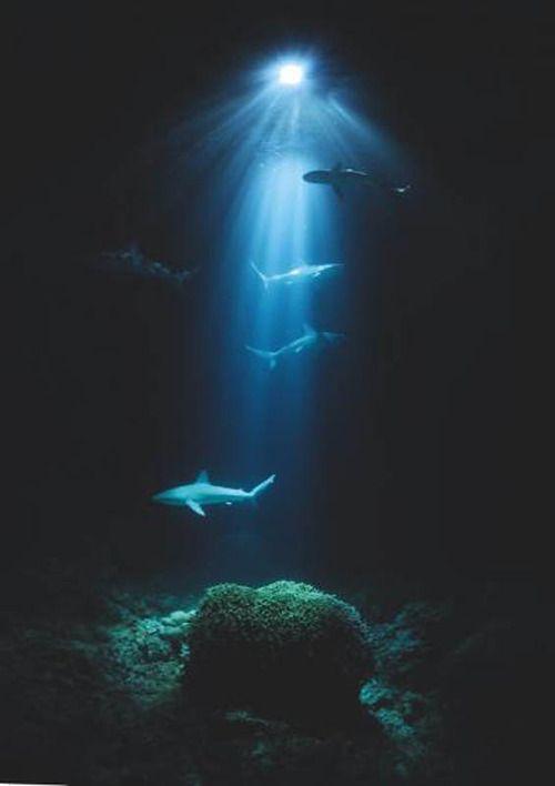 147 best Marine biology❤ images on Pinterest Ocean life - marine biologist job description