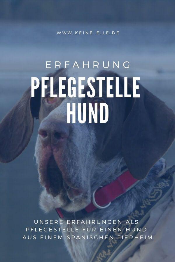 Gretas Tagebuch Teil 2 Tierheim Hunde Hunde Tierheim