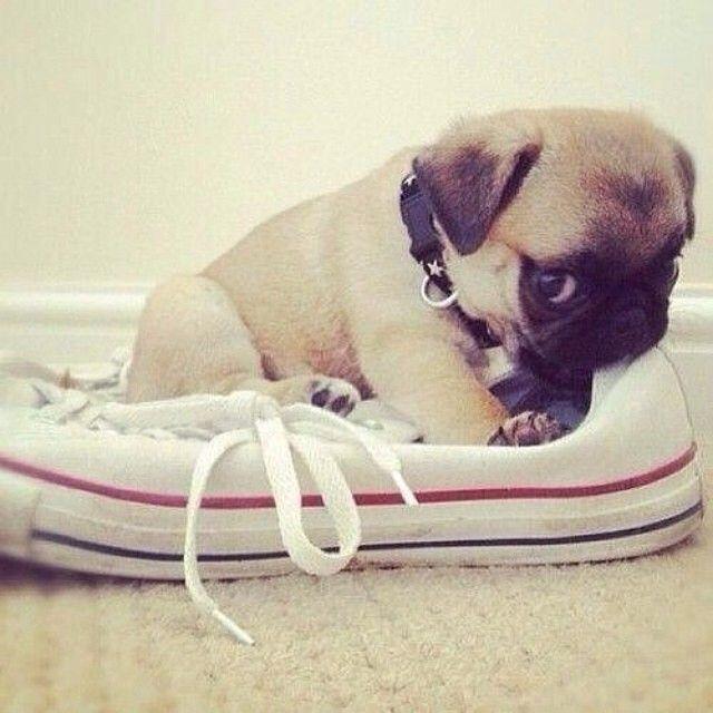Dog Pet Chew Toy# Dog supplies# pet supplies online