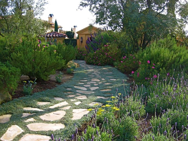 Drought tolerant front yard with silver carpet ground - Drought tolerant landscape design ...
