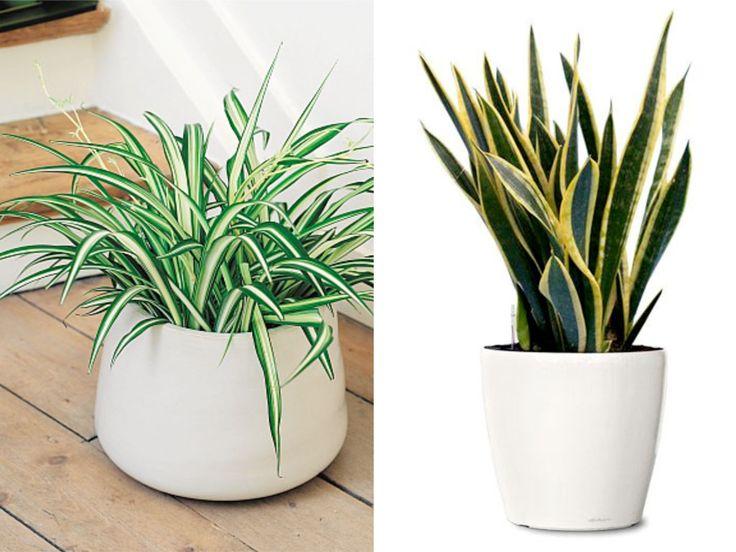 10 pokojových rostlin, které vám doma čistí vzduch   Tady Je Moje - Netradiční magazín o bydlení