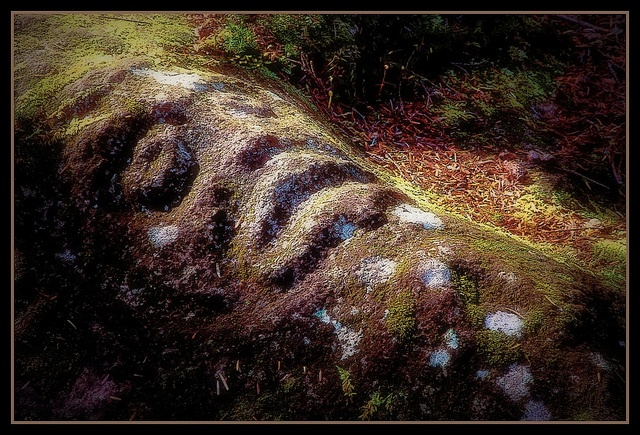 Beautiful picture of a Petroglyph taken in the forest near Bella Coola. Picture by Lloyd Guenther