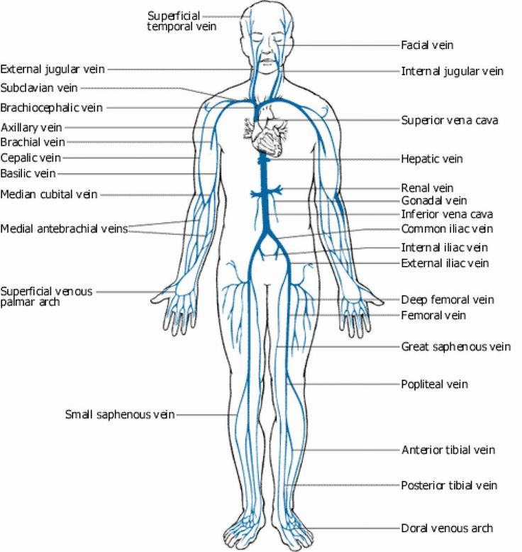 blank brain diagram sagittal hand diagram unlabeled: veins and arteries of  the body diagram