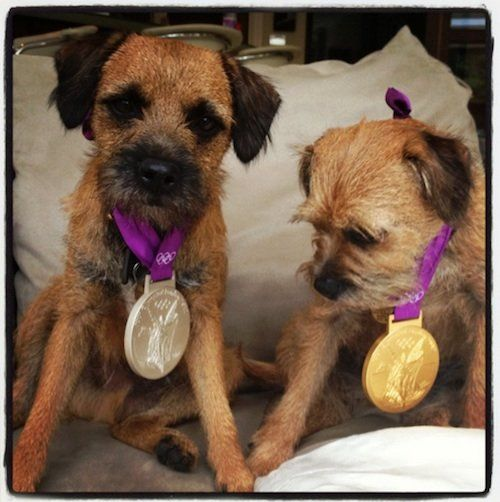 Scottish tennis player Andy Murray tweeted this  adorable picture of his puppies wearing his gold and silver medals.