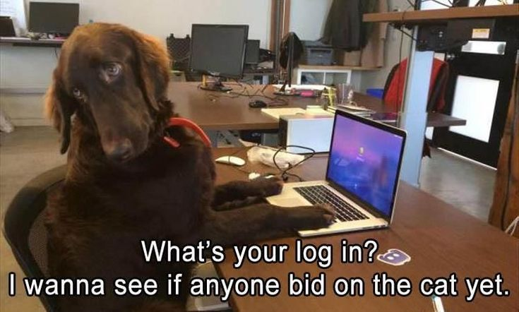 Funny Animal Pictures Of The Day - 16 Images