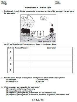 Water cycle homework help