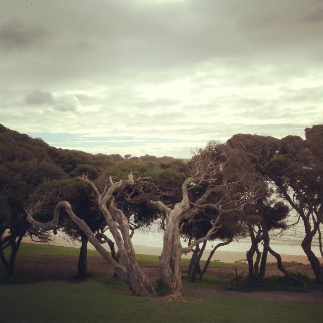 Trees, Cosy Corner, Torquay, Australia