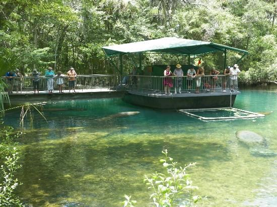 Homosassa Springs Wildlife State Park Florida: See manatee above and below the water