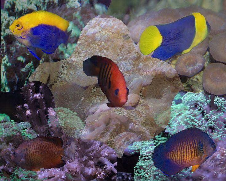 Lesson 12 Fish Composite