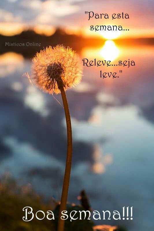 ótima Semana Boas Vibrações Dandelion Nature E Nature Photography