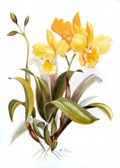 orquideas gravuras - Pesquisa Google