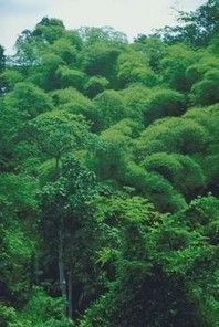 Best 25 Tropical Rain Forest Ideas On Pinterest