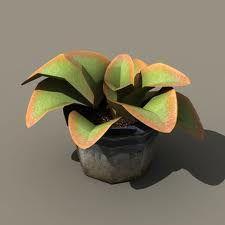 Google Image Result for http://www.dexsoft-games.com/models/images/vegetation/house_plants/preview-4.jpg