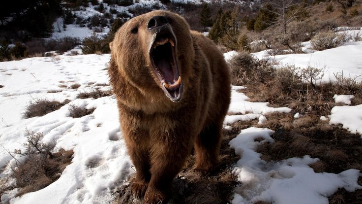 SCARY GRIZZLY
