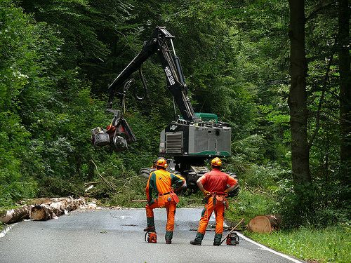 56 besten Forstwirtschaft Waldarbeit Bilder auf Pinterest