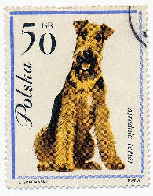 Airedale: Dogs Pet, Dogs Postage, Aired Terriers, Amazing Stamps, Airedale Terriers, Dogs Stamps, Aired Stamps, Aired Dogs, Postage Stamps