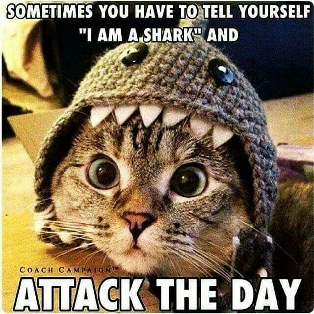 "Be a shark. Attack the day. ""Sometimes you have to tell yourself ""I am a shark"" and attack the day."" fb"
