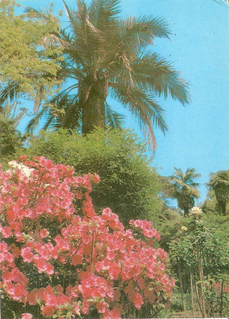 Botanická záhrada v Suchumi