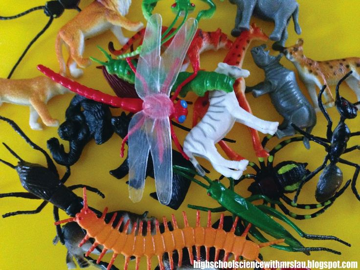 Inspiration from the Dollar Store: A new way to teach Dichotomous Keys and Taxonomy  High School Science With Mrs. Lau: Blog