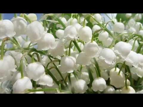 Весна пришла! Оркестр Поля Мориа  - Paul Mauria - YouTube