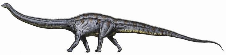 Planète GAIA -> Dinosaures -> DINO du Jurassique -> Diplodocus <-
