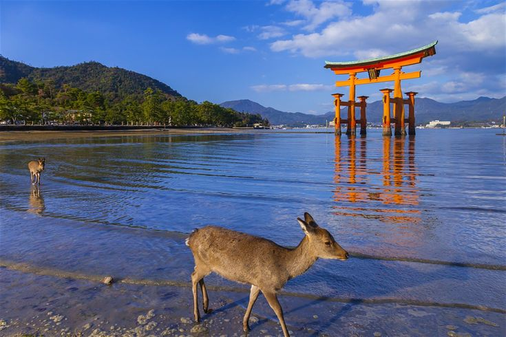 Explore Miyajima holidays and discover the best time and places to visit. | The small island of Miyajima (宮島) is a Unesco World Heritage Site and one of Japan's most visited tourist spots. Its star attraction is the oft-photographed vermilion <em>torii</em> (shrine gate) of Itsukushima-jinja, which seems to float on the waves at high tide – a scene that has traditionally been ranked as one of the three best views in Japan. It is also at its evocative best at sunset, or wh...