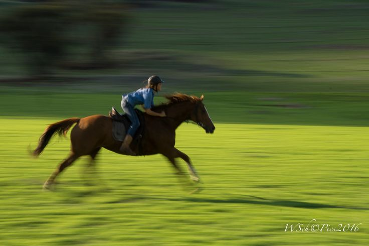 L1M2SP3           Sony A58, Sigma Lens 3.5-6.3/18-250mm, focal length 75mm, ISO 200, f/22, 1/30sec, time 15:49, S-Mode, panning, handheld, Autofocus on Continuous, Lightroom: Highlights +9, Lights +5