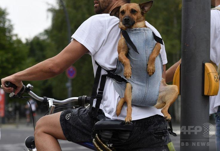 ドイツ首都ベルリン(Berlin)のティーアガルテン(Tiergarten)で、自転車に乗る飼い主の背中に背負われる犬(2014年8月7日撮影)。(c)AFP/TOBIAS SCHWARZ ▼8Aug2014AFP|移動も楽ちん?飼い主に背負われサイクリング http://www.afpbb.com/articles/-/3022607