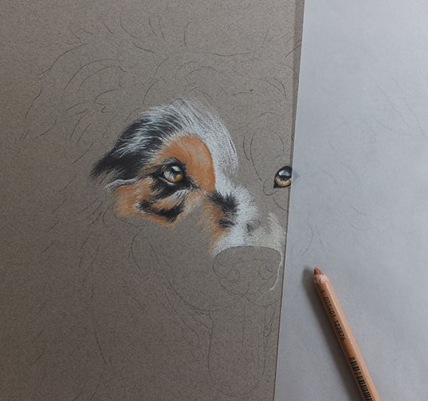 "progress photo of the most gorgeous Merle coloured Border Collie ""Star"""