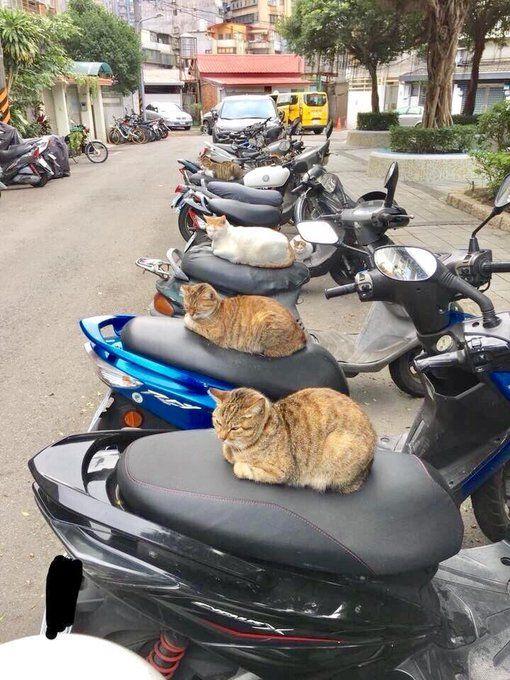 chats à bécane.