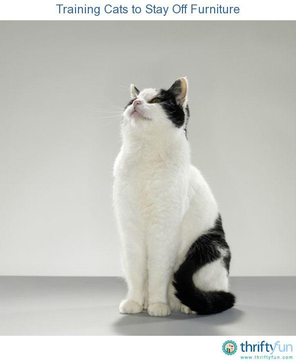 Best 25+ Train Cats Ideas On Pinterest | Litter Training Kittens, Litter  Box Training Kittens And Cat Toilet Training