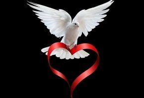 лента, сердечко, голубка