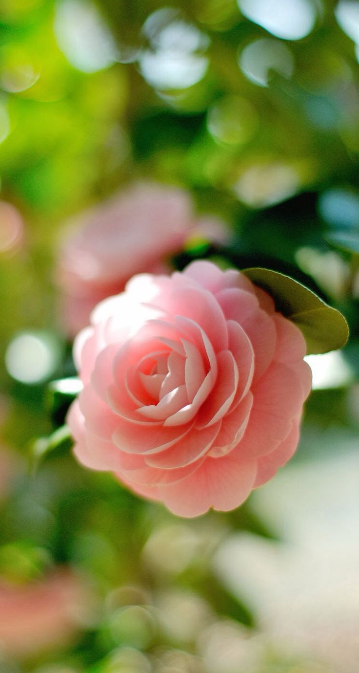 124 best plants images on pinterest