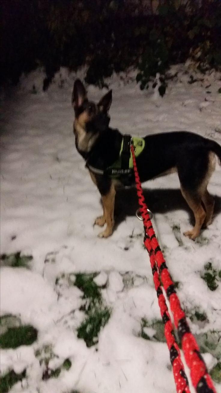 Hunde Foto: Gudrun und Colita - Mein Baby Hier Dein Bild hochladen: http://ichliebehunde.com/hund-des-tages  #hund #hunde #hundebild #hundebilder #dog #dogs #dogfun  #dogpic #dogpictures