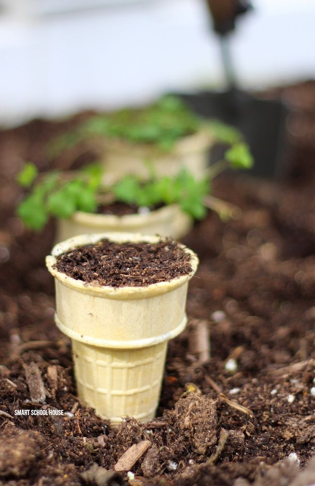 Ice Cream Cone Seedling Garden - start seeds in ice cream cones and then plant them when they're ready. Perfectly biodegradable!