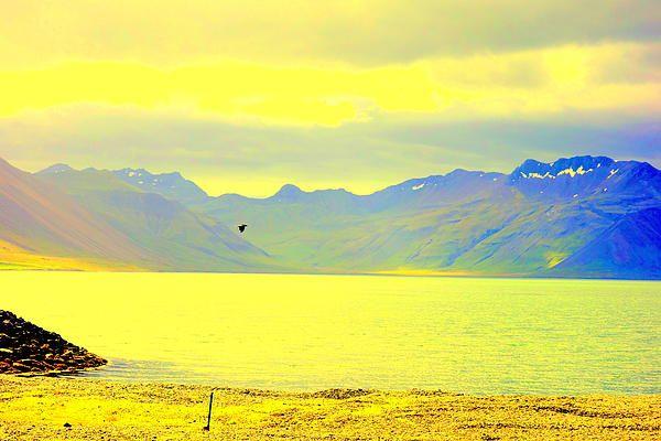 Black Bird Golden Landscape