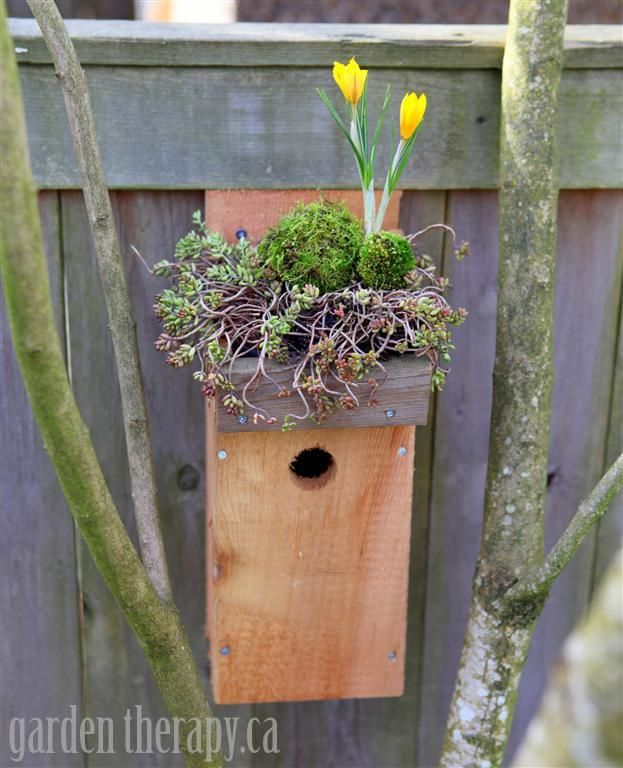 Green Roof Birdhouse DIY with crocus, moss and sedum (via gardentherapy.ca)