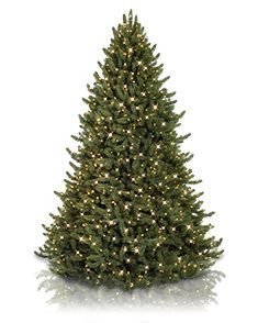 Pre Lit Artificial Christmas Trees - Color+Clear Lights | Balsam Hill