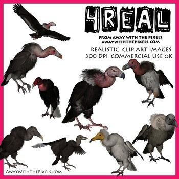 4 Real! Realistic Vulture Clip Art - 7 Breeds /10 Images. OK for commercial use